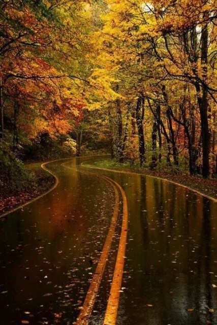 Wet fall road