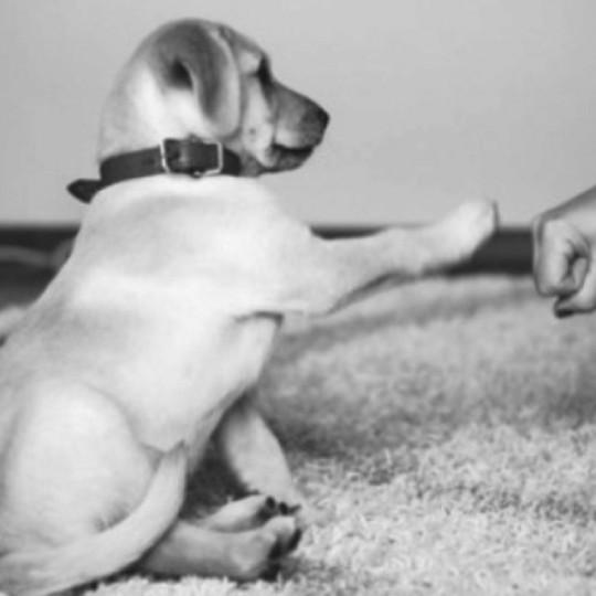 Puppy fist pump!